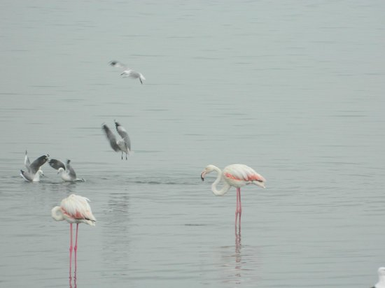 Oyster Box Guesthouse: Flamingos in the lagoon opposite the house