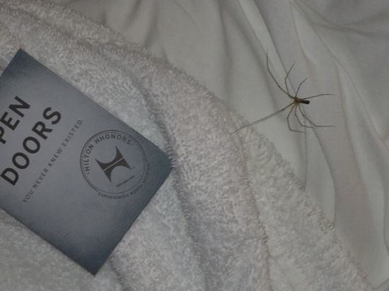 Hilton Northampton: Spider came to say Bye bye as I was about to check out