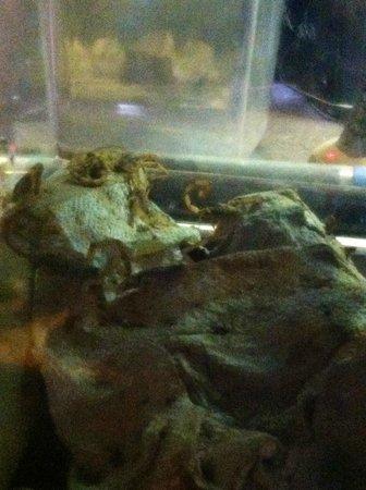 Rattlers & Reptiles: Scorpions
