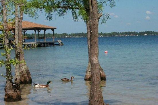 Ducks at White Lake Holiday Resort