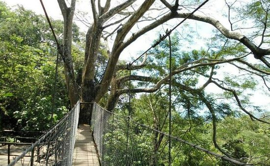 The Treehouse: on the way to the Yoga deck