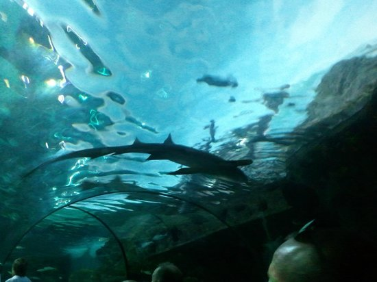 Fish Feeding Time Picture Of Ripley 39 S Aquarium Myrtle
