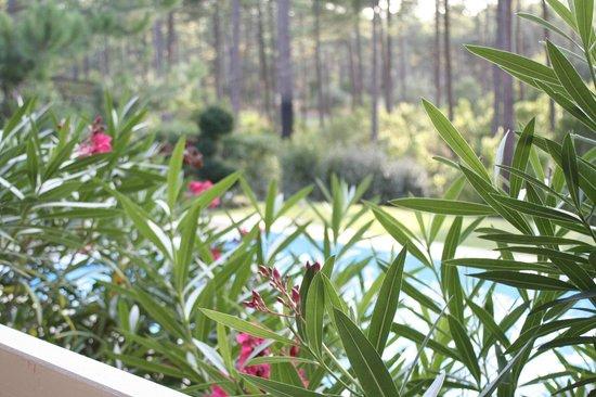 ESTIVEL - Villas Eden Parc Golf : Piscine