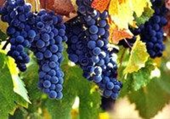 Saint Helena Wine Tours