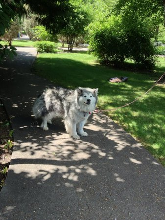Conrad Mansion: This beautiful dog greeted us as we entered the grounds