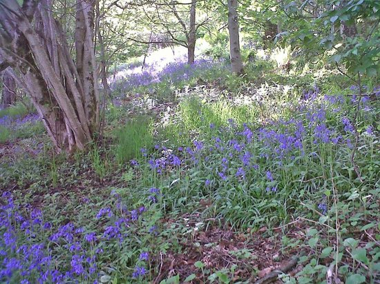 Brae House Bed and Breakfast: Loch Tat bluebells