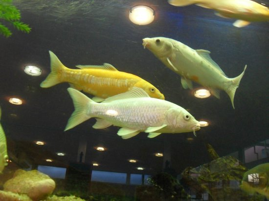 Restaurant L'Aquarium : Aquarium à l'Aquarium