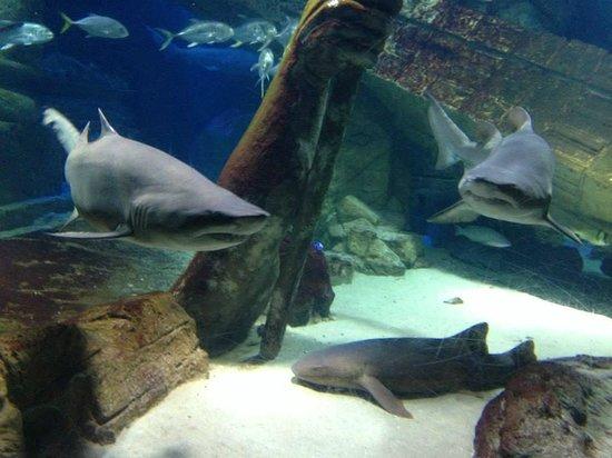 Shark Tank Picture Of Long Island Aquarium Riverhead