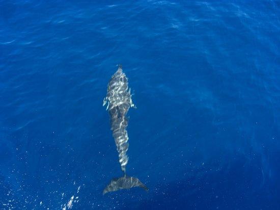 Astoria Hotel: Dolphins acompany us on boat trip to Scopelos