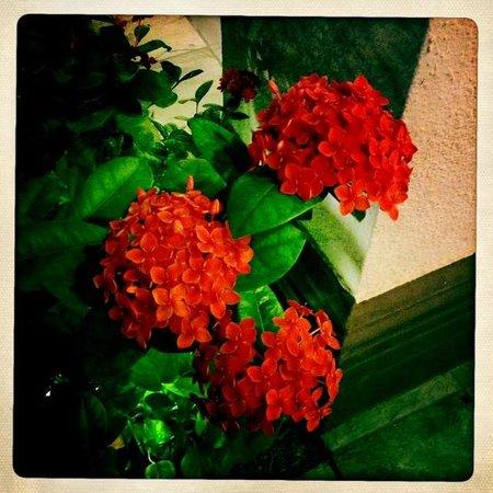 Casa De Palmas Renaissance McAllen Hotel: Beautiful flowers
