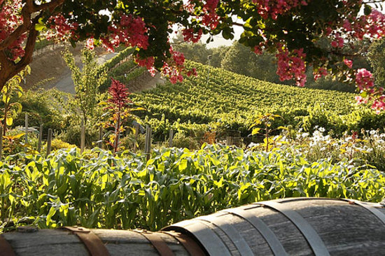 Sonoma County Farm