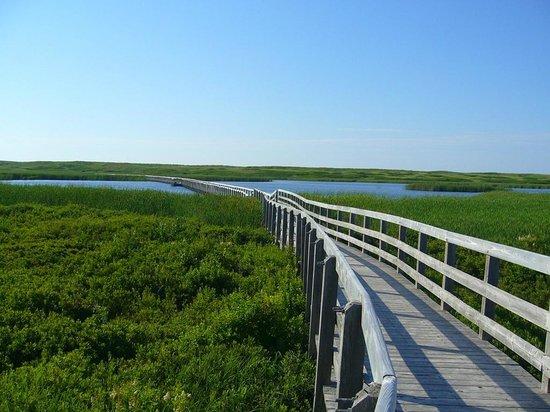 Prince Edward Island, Canada: Greenwich boardwalk