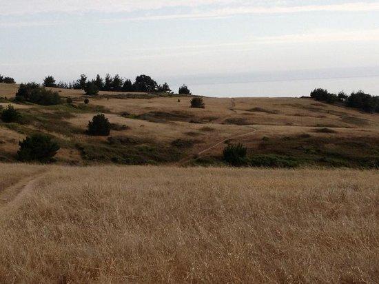Fiscalini Ranch Preserve: The bluffs