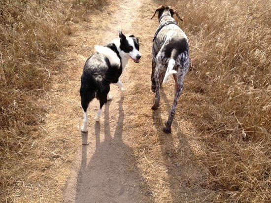 Fiscalini Ranch Preserve : The dogs