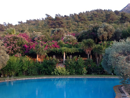 Antik Zeytin Hotel & Art: Olive trees and flowers surrounding the pool