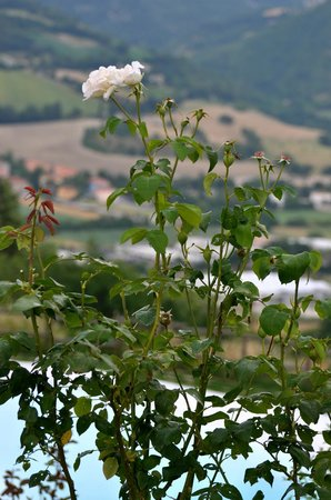 Agriturismo Pietra Rosa : Panorama dalla piscina