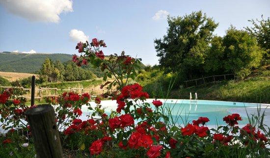 Agriturismo Pietra Rosa : La piscina