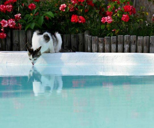 Agriturismo Pietra Rosa : Utenti in piscina