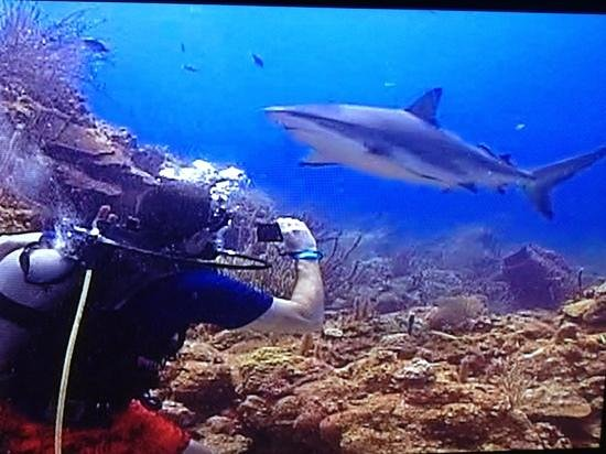 Shark dive foto di roatan bay islands tripadvisor - Immagini di dive ...