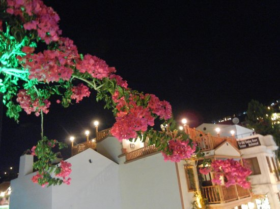 Fez Restaurant: Fez is draped with Bouganvillia
