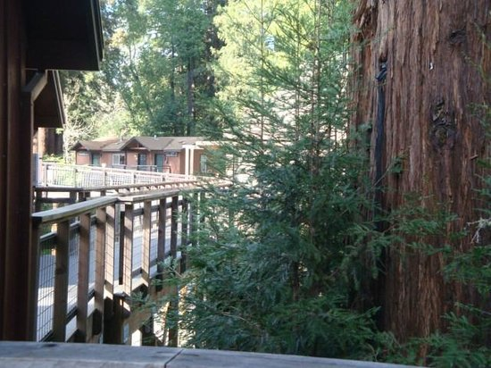 ‪‪Creekside Inn & Resort‬: redwoods from deck‬