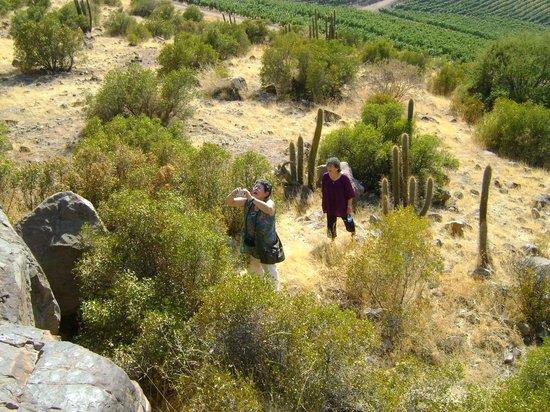 Parque Arqueológico Paidahuén: Uno de los tantos visitantes disfrutando del paisaje