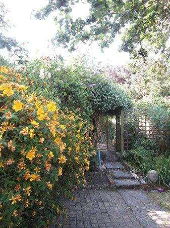 Jasmin Cottage: The jasmine bush on the pergola.