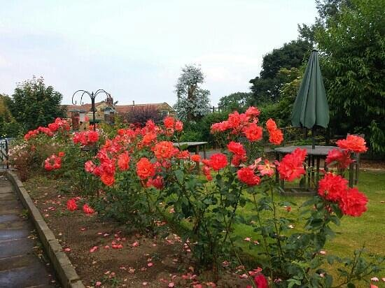 Dunsley Hall: lovely rose garden