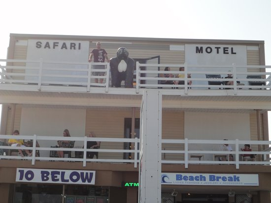 Safari Motel Boardwalk: Motel from boardwalk