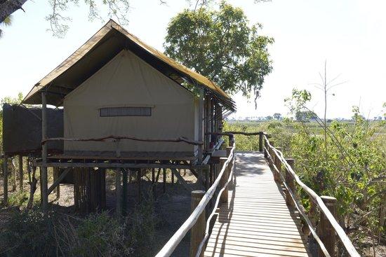 Tubu Tree Camp: walkway to our room