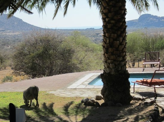Ai-Aiba The Rock Painting Lodge: Wart hogs mow the lawn near the pool