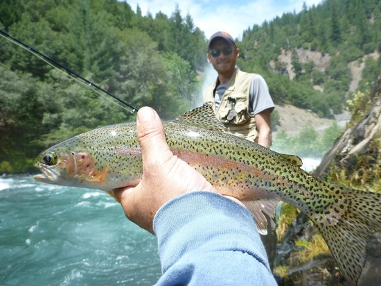 Jack Trout Fly Fishing: Beautiful Rainbow Trout I caught with Jack