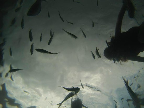 Langkawi Coral : Snorkeling with our Go Pro camera