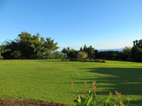 Maui Ocean Breezes: Lush grounds