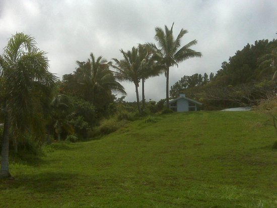 Hale Kukui: Front yard and banyan tree, passion fruit and bamboo path to the waterfall on the left