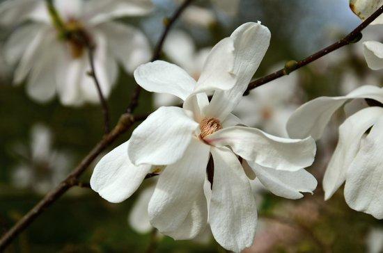 Cantigny Park: Spring at Cantigny