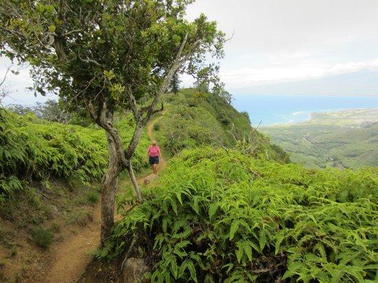Waihee Canyon: trail ridge