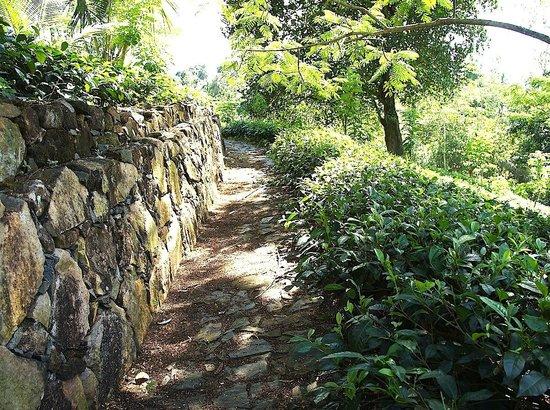 Niyagama House: Tea Plantation Path