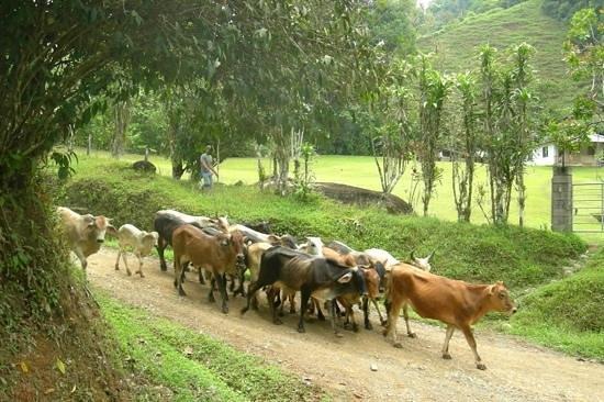 La Mariposa Hotel: horseback tour