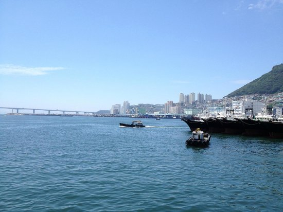Busan Port: Beautiful port with seagull flying.