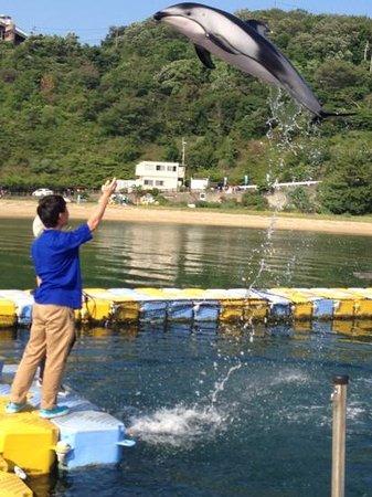 Japan Dolphin Center : エサやり500円、トレーナー体験1500円がまずはオススメ。