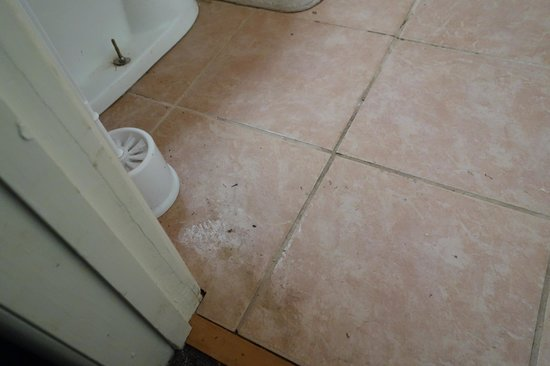 Redwood Motel: Filthy floor