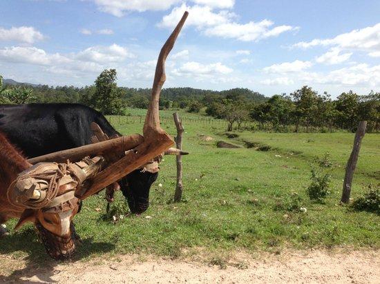 Cabra Rides: Unequally yoked