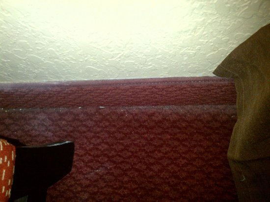 Extended Stay America - Fort Lauderdale - Davie : Dirty carpet