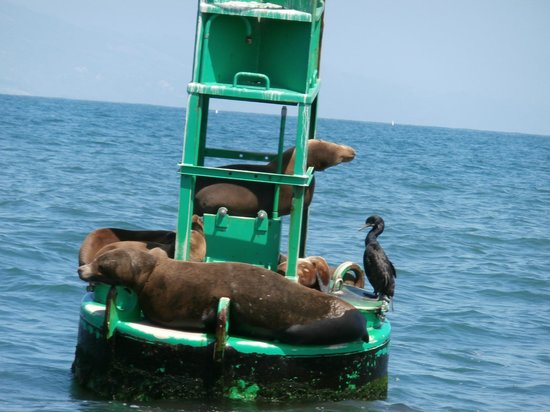 Santa Barbara Land Shark: Seal of fun