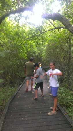 Acadiana Park Campground: rainforest tree canopy