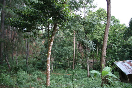 Forest Paradise - Ella: Vue sur la forêt de la chambre
