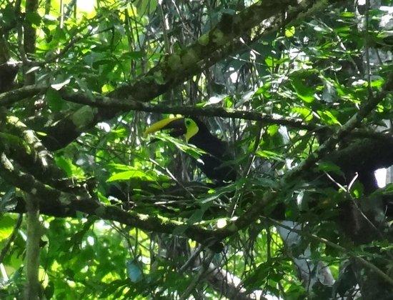 LagunaVista Villas: A toucan
