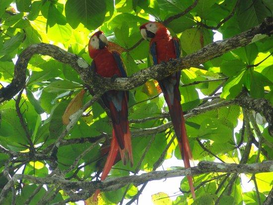 LagunaVista Villas: Marvellous macaws