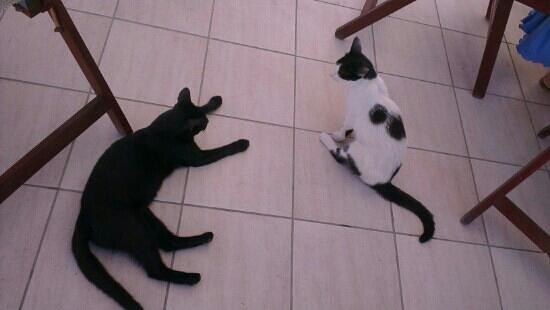 Arion Bay Hotel: Local cats are very friendly)